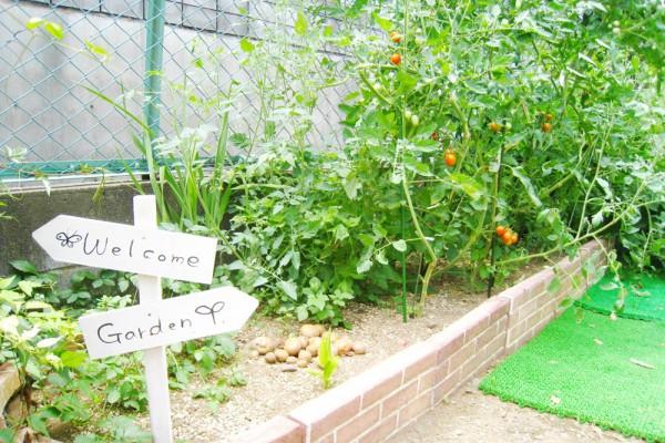 浦和-菜園