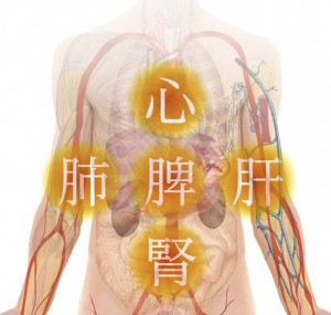 anatomy-254129_1280_03