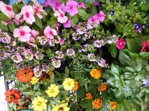 blog202007_25_②お花を見て笑顔