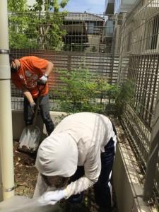 荒れ放題の敷地内の、木の根っこ、雑草を抜いています。